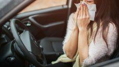 Conducir con alergia es prácticamente inevitable si se sufre de ella, pero podemos tener una serie de precauciones con las que hacer de nuestros trayectos al volante algo más seguros.