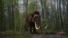 La ciencia está intentando resucitar al mamut lanudo