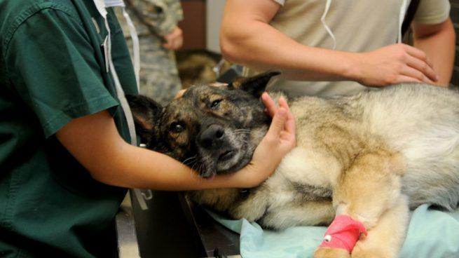 preparar al perro para ir al veterinario