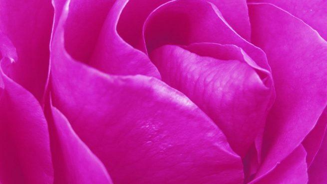 Curiosidades del color rosa