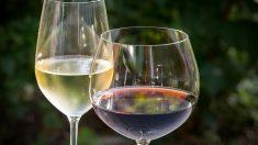Diferencias entre vino blanco y vino tinto