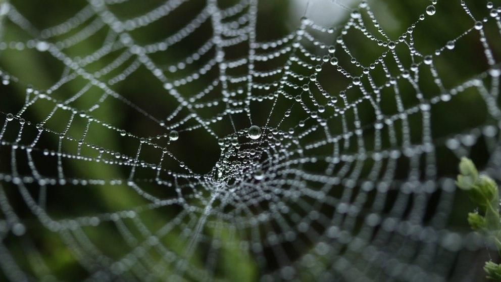 Fibras de celulosa artificial, el biomaterial más fuerte del mundo