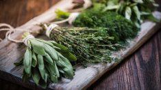 Las plantas medicinales son ideales para utilizar como remedios caseros.