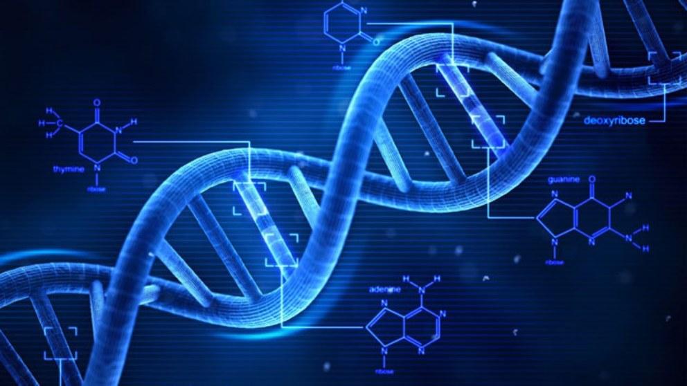 Watson y Crick, los descubridores del ADN