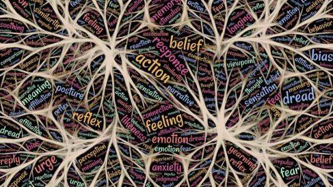 Neurociencia: ¿Qué estudia esta rama de la ciencia?