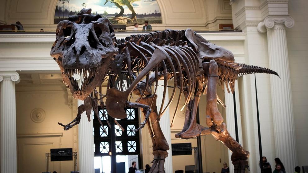 No hubiésemos descubierto a los dinosaurios sin la paleontología.