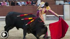 toros-fiestas-del-pilar-2-655×368 copia