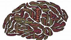 Cerebro humano: mitos y verdades