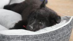 Cómo hacer una cama para perros de forma fácil