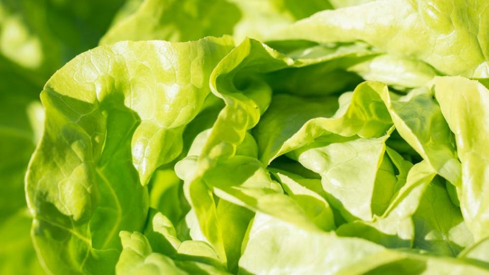 Comer ensalada durante el embarazo puede tener riesgo para la salud