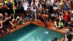 El equipo Red Bull ha cumplido 250 carreras en Fórmula 1, tiempo suficiente para haber ganado cuatro mundiales de pilotos y otros tantos de constructores. (Getty)