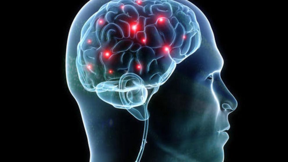 ¿Por qué tu cerebro nunca deja de crecer?