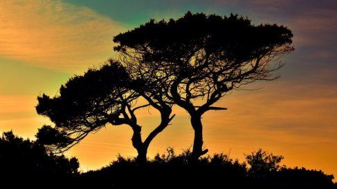 Cuánto oxígeno produce un árbol