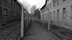 Auschwitz, un campo que nunca debió existir.