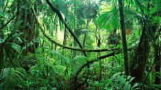 Rescatados cinco hermanos que habían sido abandonados por su madre en plena selva