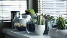 Todos los pasos a seguir para saber cómo cuidar un cactus  de manera efectiva