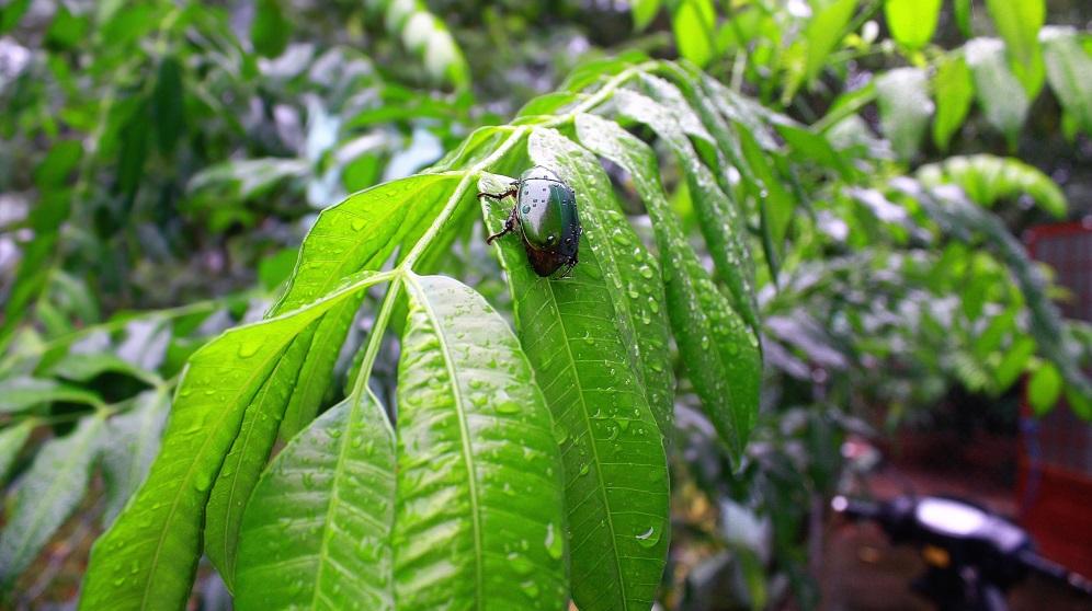Pasos para hacer insecticida ecológico casero