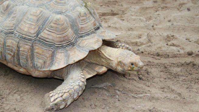 Pasos para cuidar bien el caparazón de las tortugas.