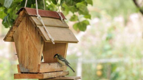 Pasos para hacer una casa para pájaros