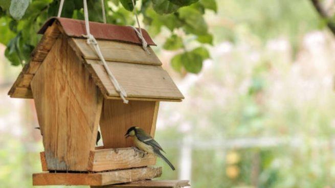 48a0ada290604 Cómo hacer una casa para pájaros fácil paso a paso