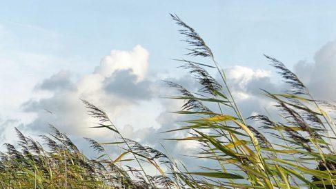 Imagen de archivo de fuertes rachas de viento.