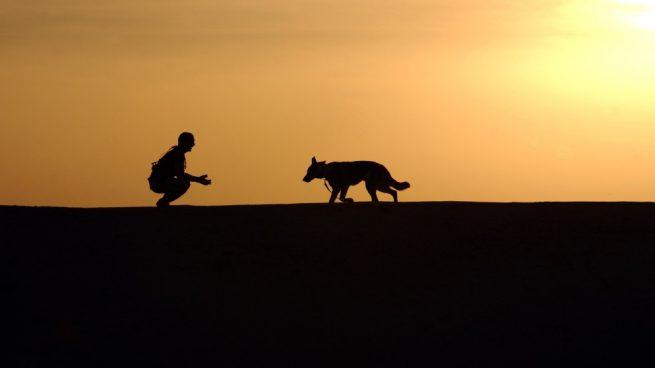 adiestrar a un perro