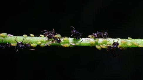 Cómo detener una invasión de hormigas de forma eficaz