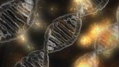 Los cromosomas sexuales, vitales para definir nuestra existencia.