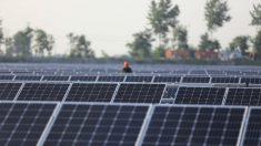 Planta solar (Foto: GETTY).