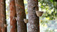 La resina en la naturaleza  y el crecimiento de la resina epoxi