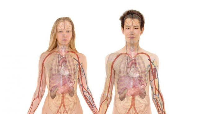 Conoce los tejidos del cuerpo humano.