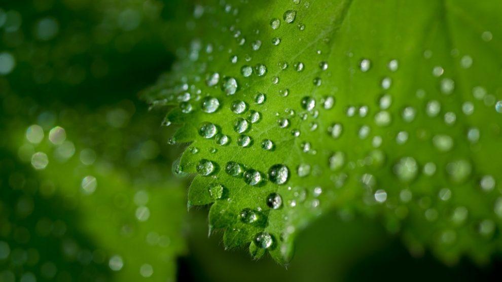 La Fotosintesis, fundamental para el reino vegetal.