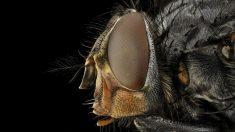 ¿De qué se alimentan las moscas? una buena pregunta…