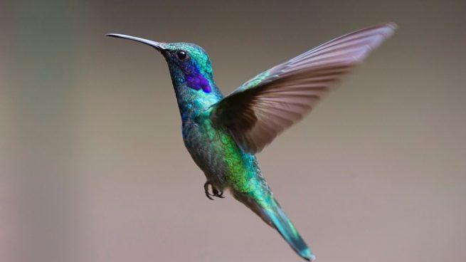 Conocer reproducción de las aves