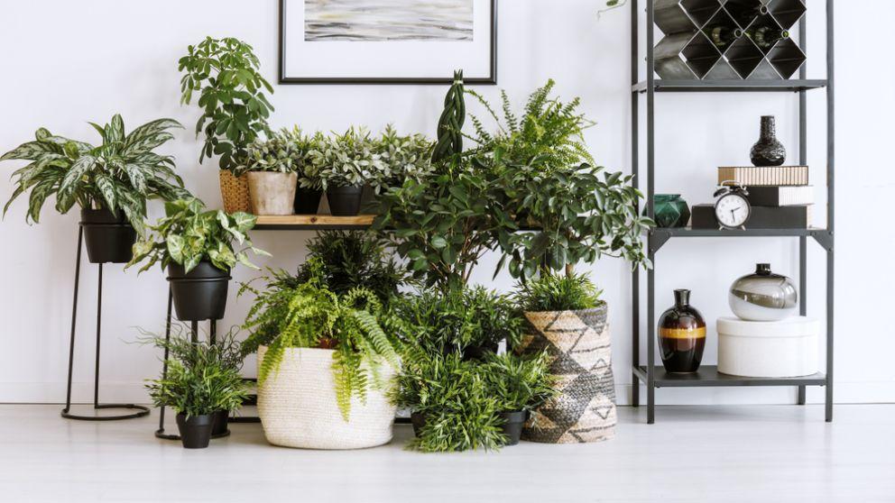 Pasos para hacer que las plantas duren más