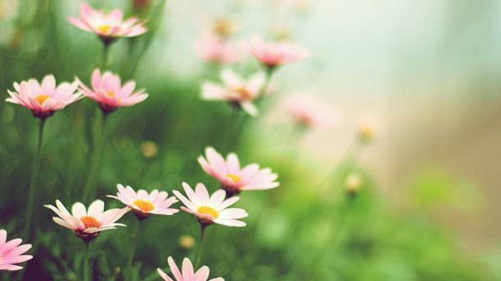 Pasos para hacer un jardín de flores silvestres
