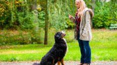 Los pasos para saber cómo entrenar a un perro para que se siente