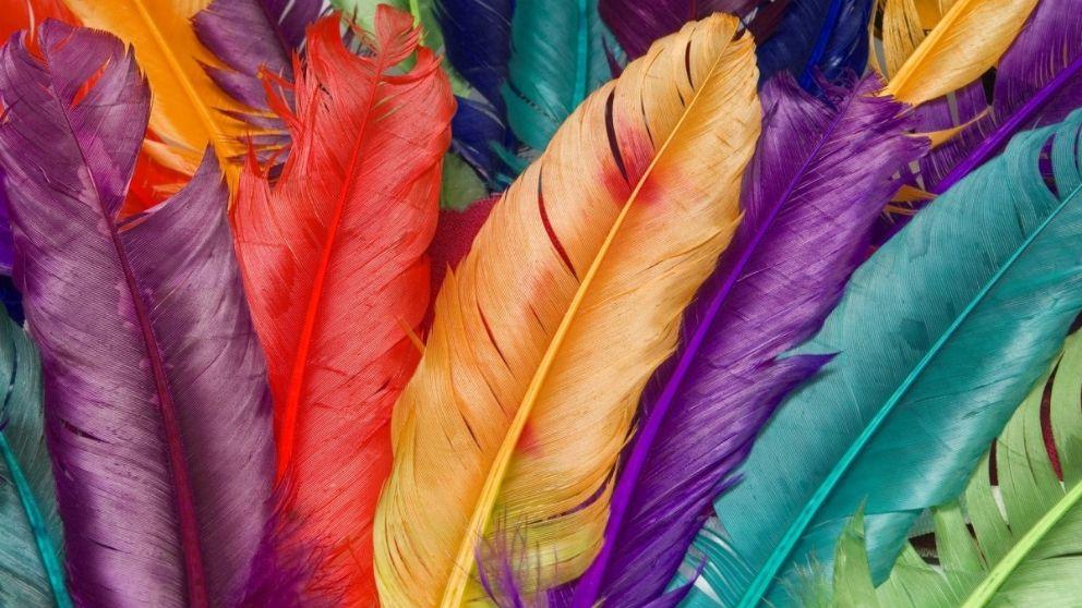 Todos los pasos para saber cómo teñir plumas