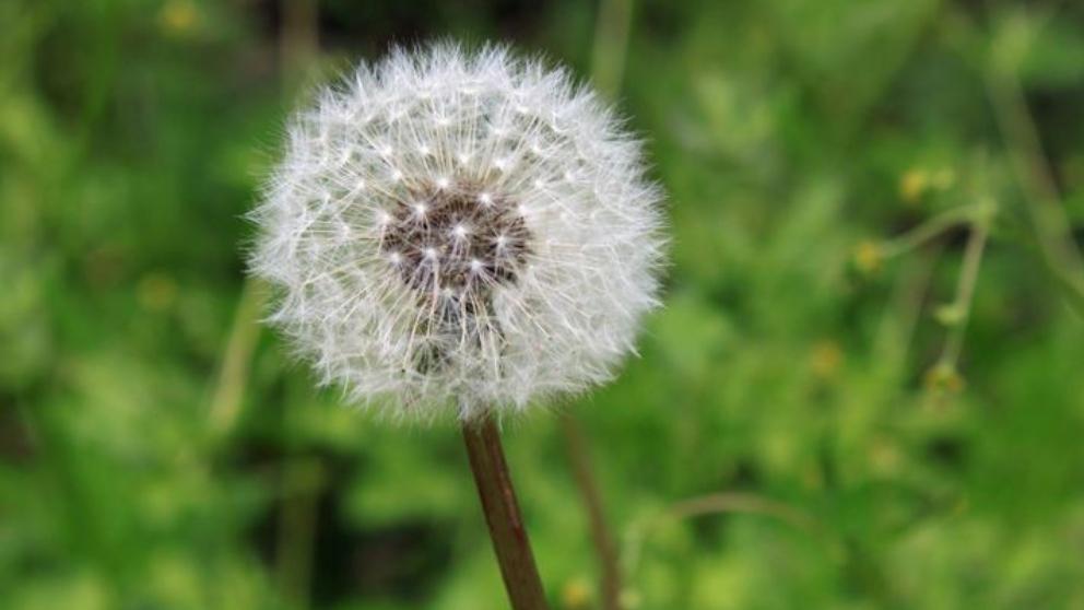alergias y cansancio
