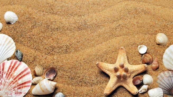 Conoce tipos de conchas marinas
