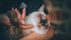 Pasos para atraer la atención de un gato de forma efectiva
