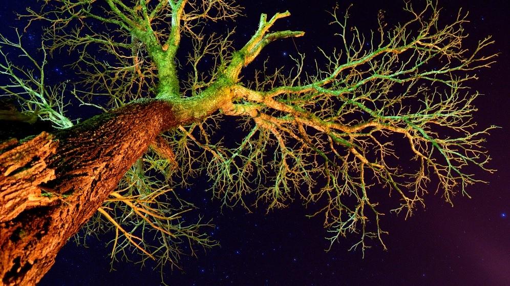 Pasos para enderezar un árbol inclinado sea cual sea su edad