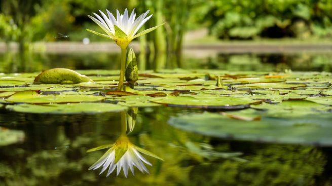 estanque para el jardín