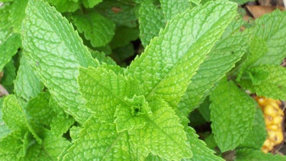plantas que atraen positividad