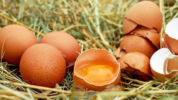 cuidar gallinas ponedoras