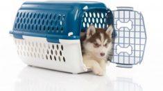 Pasos para hacer una jaula para perros o transportín