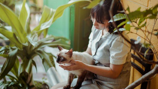 sedar a un gato