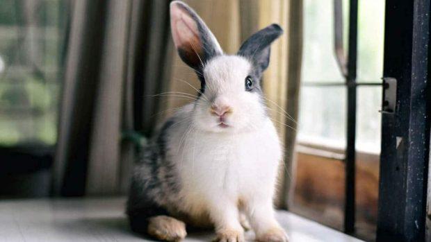 Cómo construir una jaula para conejos sencilla