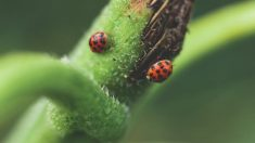 La importancia de los animales pequeños en la conservación del planeta