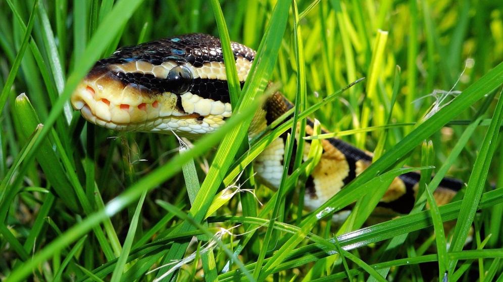 Cómo hacer un repelente de serpientes eficaz y duradero